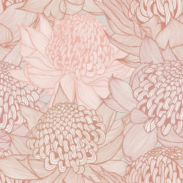Telopea Bloom, Radiant