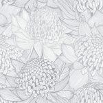 Telopea Bloom, Silvery